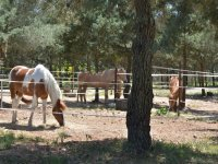 Ecco i nostri cavalli