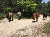 Venite a conoscere i nostri cavalli