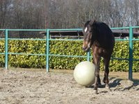 horses play in apalla