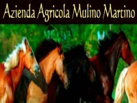 Azienda Agricola Mulino Martino