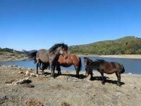 cavalli per i più piccini