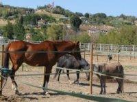 Soggiorni equestri Poggio Duca