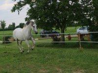 il nostro cavallo che trotta