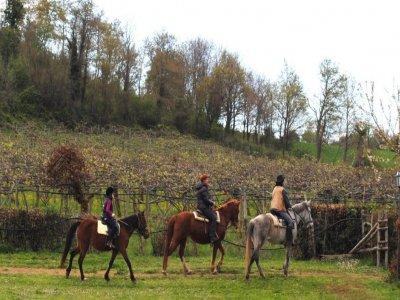 Passeggiata a cavallo di 2 ore, Bracciano