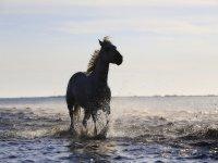 Cavallo al mare