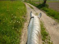 Passeggiata a cavallo di 1 ora, Campiglione Fenile