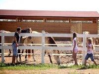 Cavalli nel maneggio