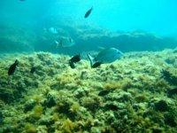 Meravigliose Specie Marine