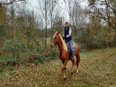 Passeggiata a cavallo nel Parco del Ticino 2 ore