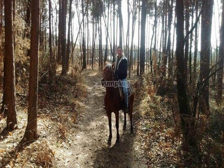 Alla scoperta dei boschi