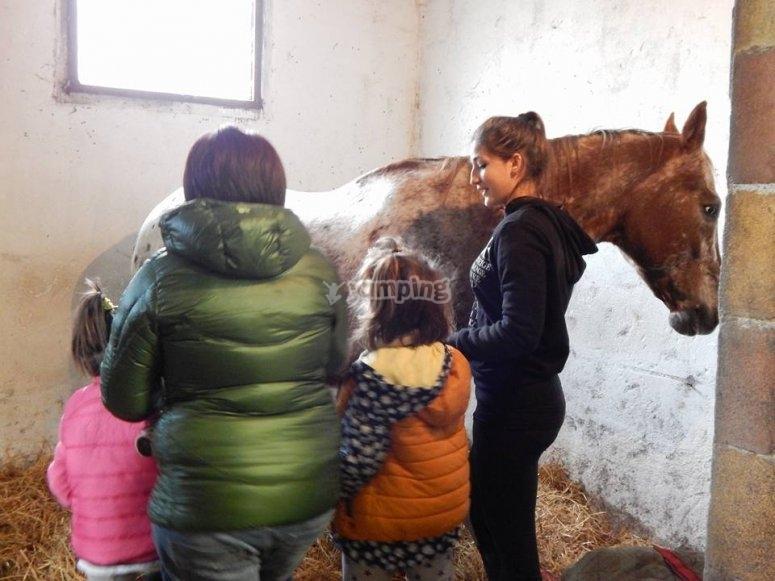 La preparazione del cavallo