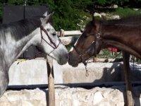 Bellissimi cavalli
