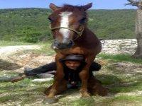 Equitazione e simpatia
