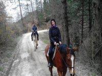 Passeggiata a cavallo nel bosco