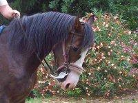 Cene sociali e attività a cavallo.JPG