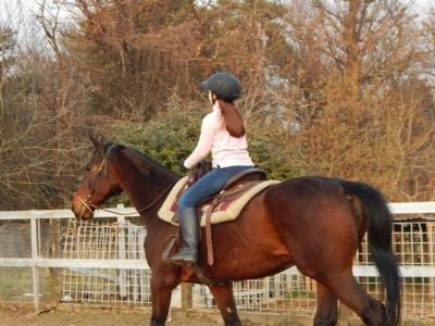 Lezione di equitazione a solbiate di 1 ora