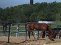 Cavalli di La Pampa
