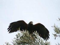 Giornata da falconiere a Ostia