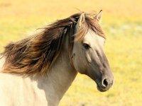 Animals meek and beautiful