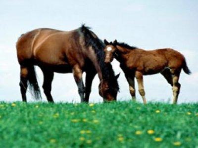 La Casa dei Cavalli