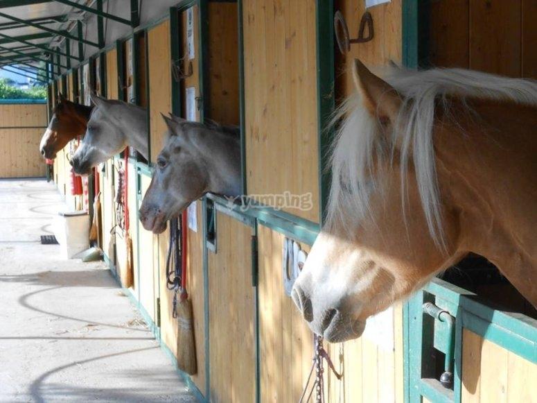 I nostri cavalli sono pronti