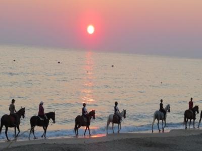 Passeggiata a cavallo in spiaggia a Fasano di 2ore
