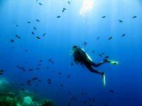 Nuotando con gli abitanti del mare.JPG