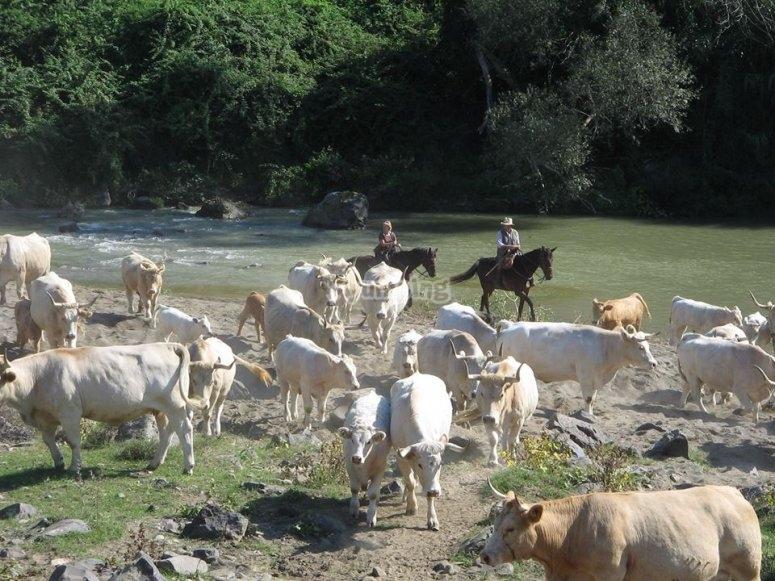 Abitanti del torrente Gretano