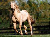 Potenza ed eleganza del cavallo