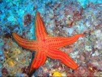 Sardinian seabed