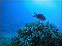 diving in Tavolara