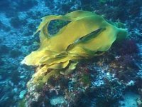 Fondo marino in giallo