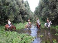 Passeggiata a cavallo in compagnai