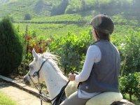 2-hour horseback ride Monteforte d'Alpone