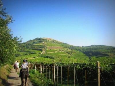 Escursione a cavallo di 3 ore Monteforte d' Alpone
