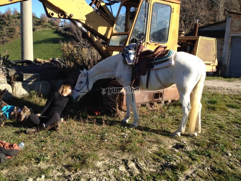 Cavallo mangiando