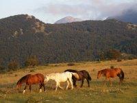 i nostri cavalli al pascolo presso il  Parco della Majella