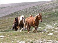 i nostri cavalli ti stanno aspettando