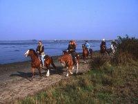 Passeggiate sulla spiaggia di romea