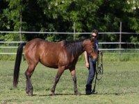 One hour horseback ride in Ostuni