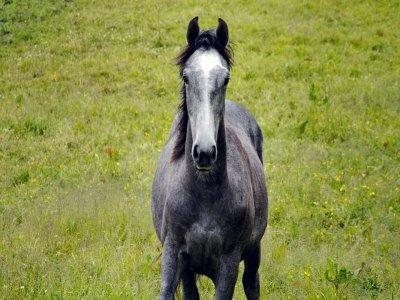 Passeggiata a cavallo di due ore ad Ostuni