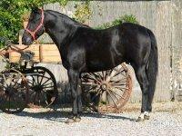 Horse ride of 1/2 day in Ostuni
