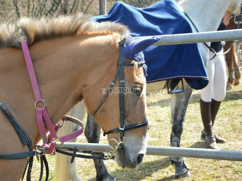 Uno dei nostri cavalli