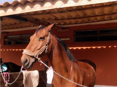Passeggiata cavallo giornata intera in Camosciara