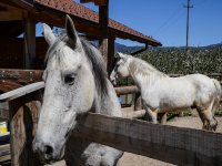che bel musetto! I nostri cavalli ti stanno aspettando