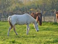 I cavalli si riposano un po' prima di ripartire per una lunga passeggiata