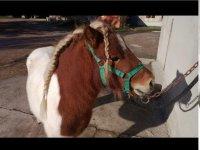 Pony per i bambini