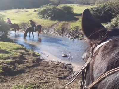 Passeggiata a cavallo (1h), Parco di Veio