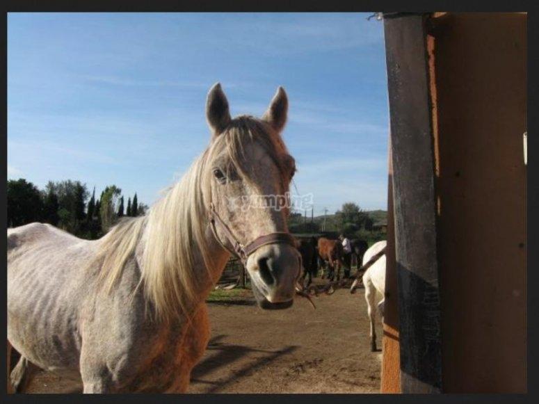 Un de nos chevaux