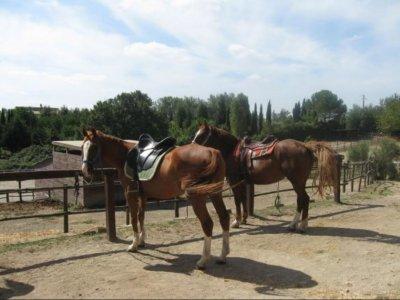 Passeggiata a cavallo (2h), Parco di Veio